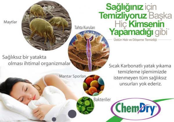 Yatak Yıkama Hizmetinde Bakteri, Böcek ve Mayt Temizliği
